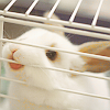 Maz (or foxxy!): PB bunny