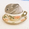 Maz (or foxxy!): Nice cup of bunny