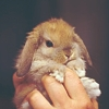Maz (or foxxy!): A bunny in the hand...is cute!