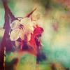 ~ Vejibra Momiji (Lady Padme Naberrie): Art: Flower