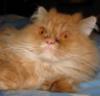 Тесса. Кошка которая.