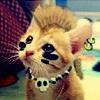 jenna_marianne: punk kitten