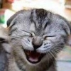 whytewytch4: Laughing kitten