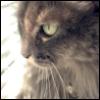 lil_kitten_love userpic