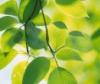 koshachya_myata: яркие листья