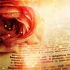 book_roses