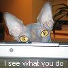 I See What U Do