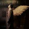 spn - castiel, spn - wings