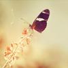 ~ Vejibra Momiji (Lady Padme Naberrie): Art: butterfly