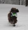 snowfrisbeedog
