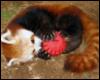 team_red_panda userpic