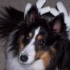 stridergurl userpic