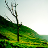 AUG - Methionine: green tree
