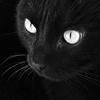 котяра черная
