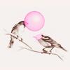 ✖stock✖「art」chillin' birds