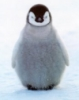 chillywilly, penguin, winter