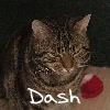 Dash LJ