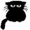 uncombed cat
