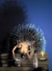 88hedgehog88 userpic