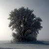shallowz: WinterIcon