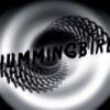 hummingbirdc userpic