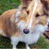 trainingjustdog userpic