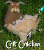Crit Chicken is a chicken