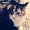 Maggie~!, Kitty!!