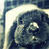 sakura_no_kage userpic