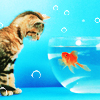cat - goldfish 2