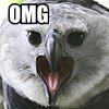omg, harpy eagle