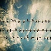 arranging userpic