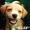 outsideth3box: Glee Puppy