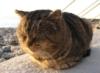 SOCHI CAT
