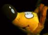 fox_chiffa userpic