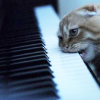 MB: keyboard cat is hungry