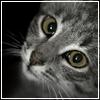 slezzzar userpic