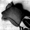 tales_of_a_rose userpic