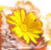 cvetistaya userpic