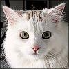 Kitties: Miss Peach