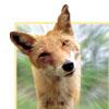 kayot_3 userpic