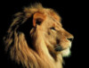 лев во тьме