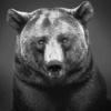 Печальный медведь