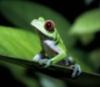 m_rainforest userpic