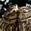ol' blood & guts: owl - cakin