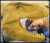 Me: T-Rex
