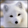byfoxlv userpic