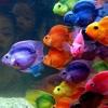 rainbow fish {unique flavorful}