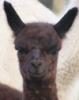 empressjad userpic