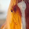 juliet316: Horse